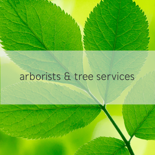 arborists & tree services