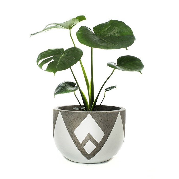 Picture of LOTUS POT - SHORT